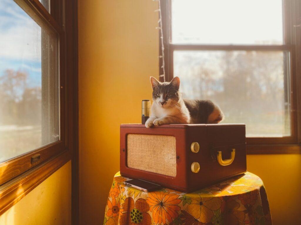 gatto cassa amplificatore