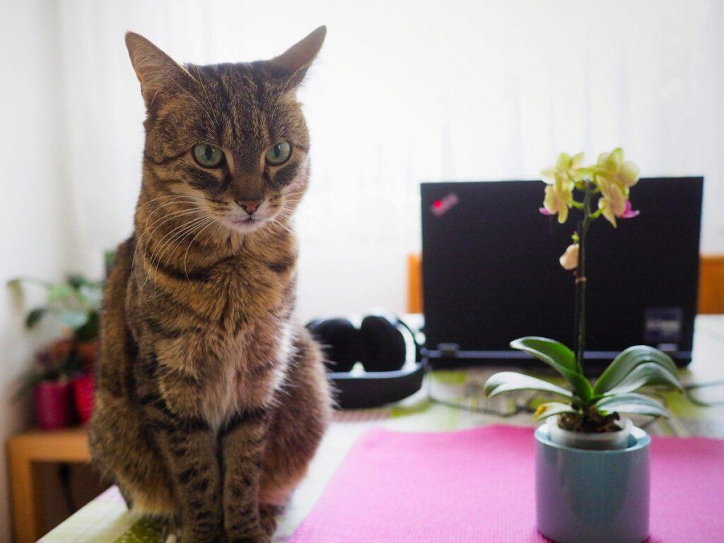 gatto tavolo fiore