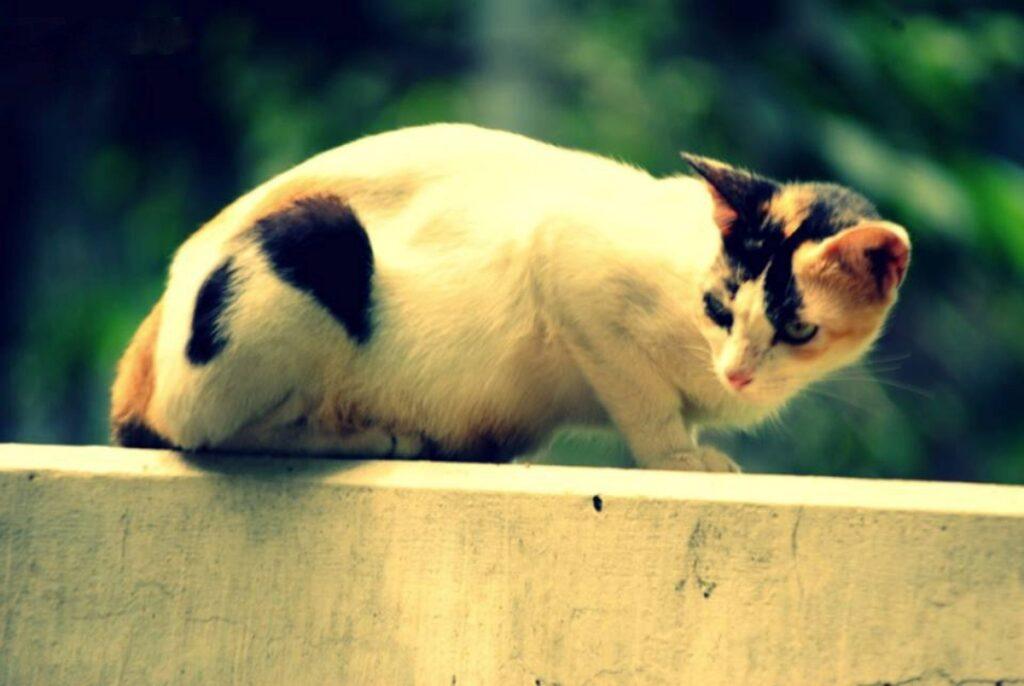 gattino tenero adorabile