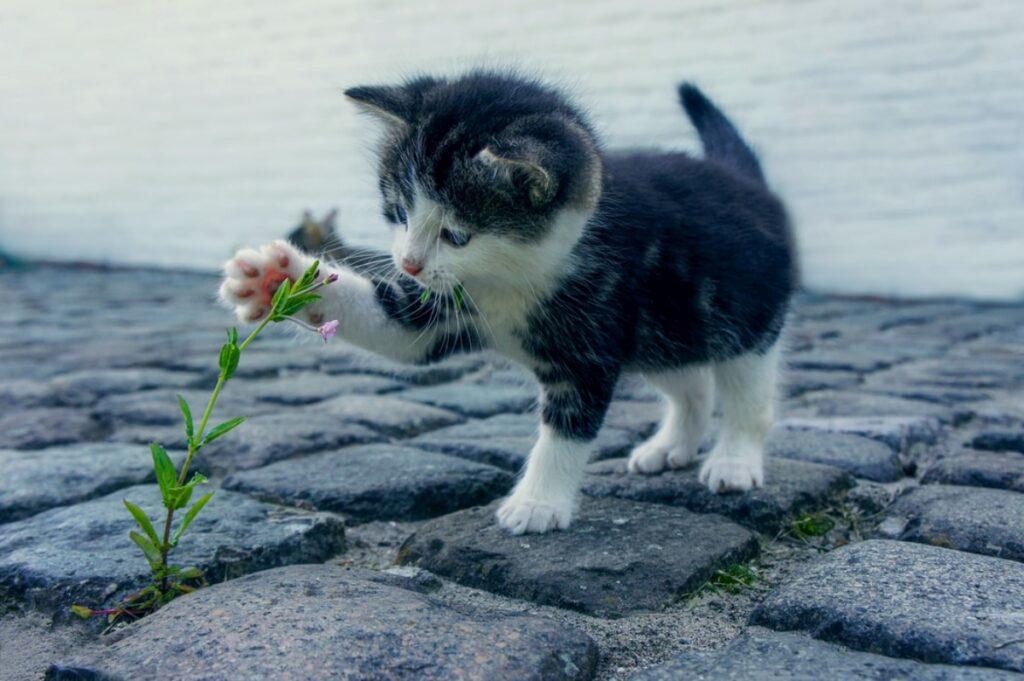 gatto fiore zampa