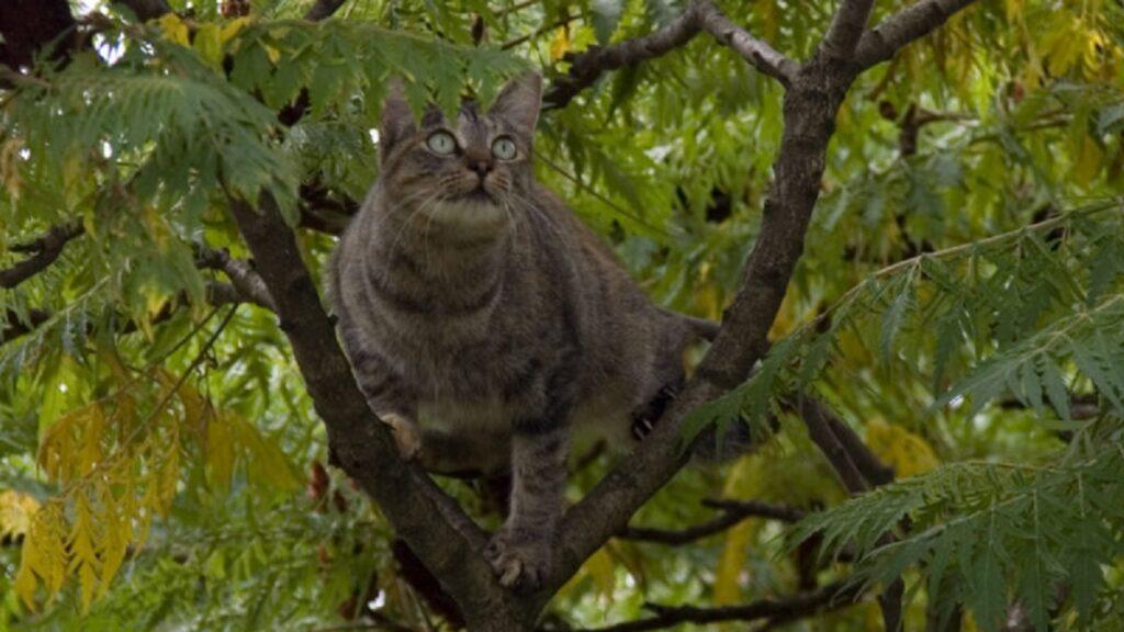 gatto albero foglie