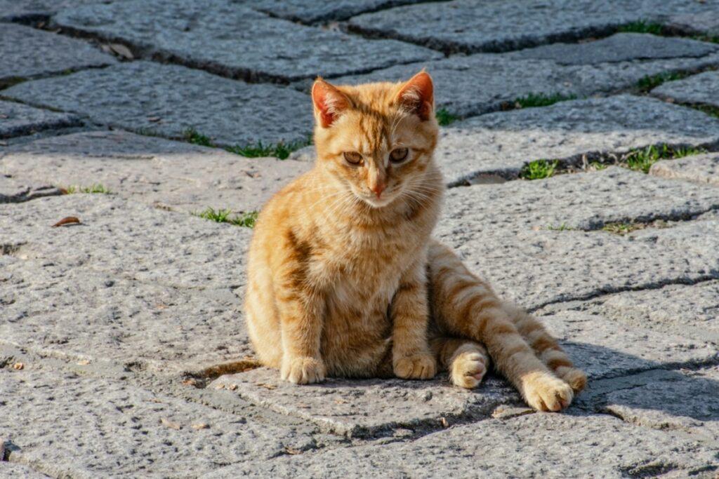 gatto seduto strada