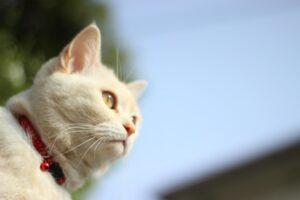 gatto bianco cielo