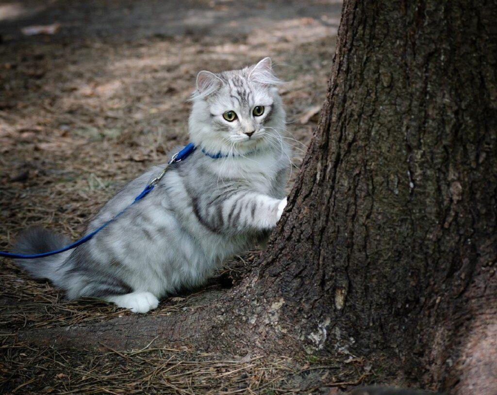 gatto albero tronco