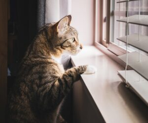gatto finestra guarda