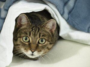 gatto letto coperte