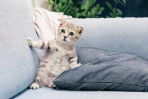 micio cuscini divano