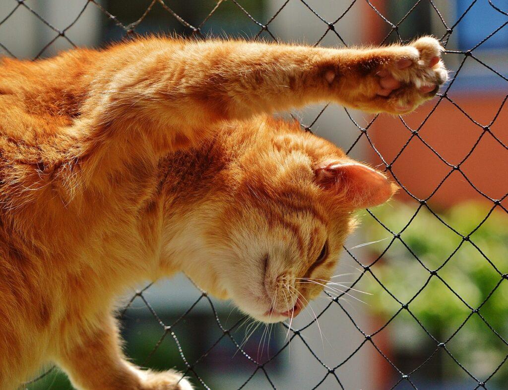 gatto rete artigli