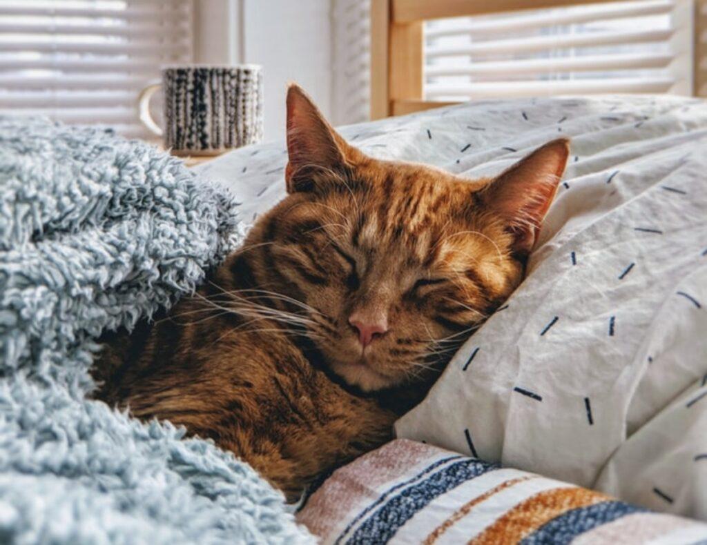 gatto letto dorme