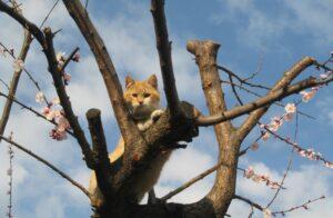 micio albero seduto