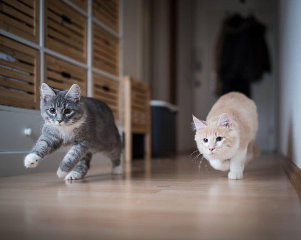 gatti corrono dolci