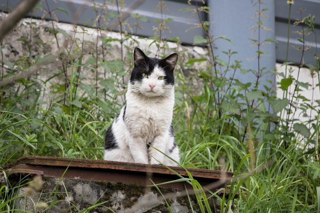 gatto seduto natura
