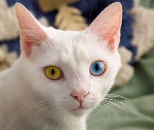 gatto occhi speciali
