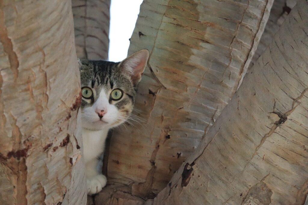 gatto pianta albero
