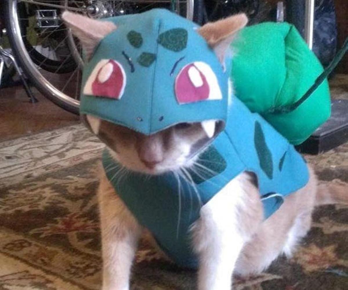 gatto pokemon