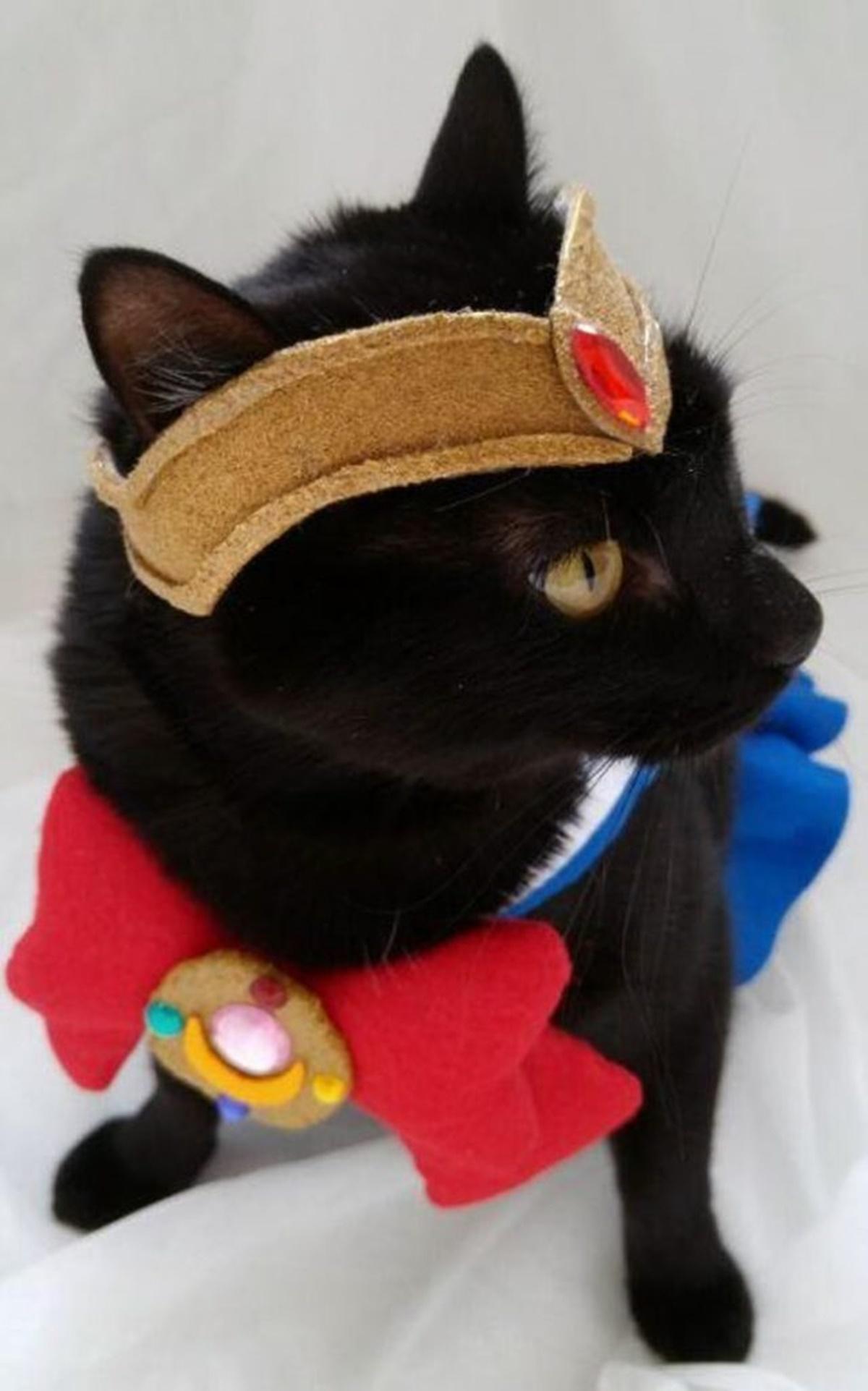 gatto sailor moon