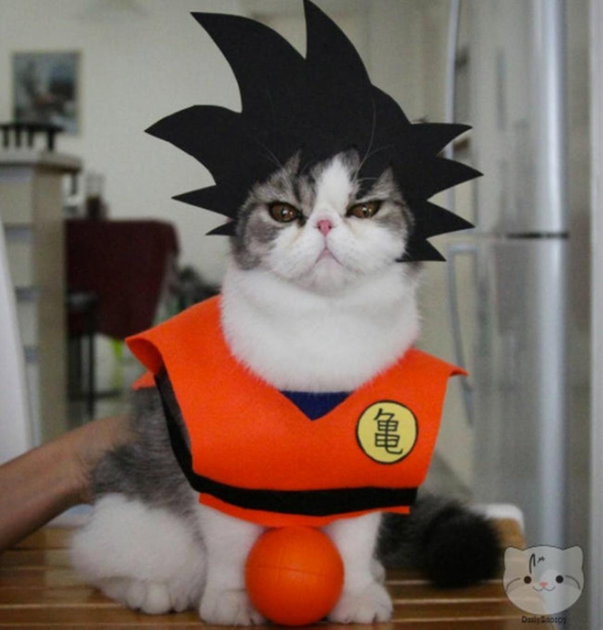 gatto goku