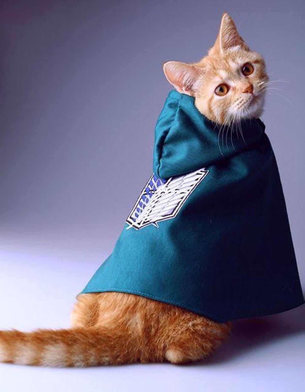 gatto adg