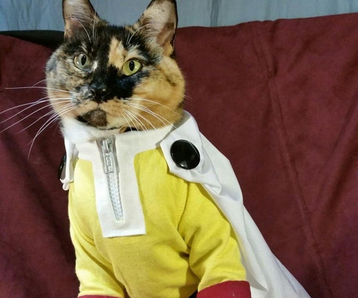 gatto one punch