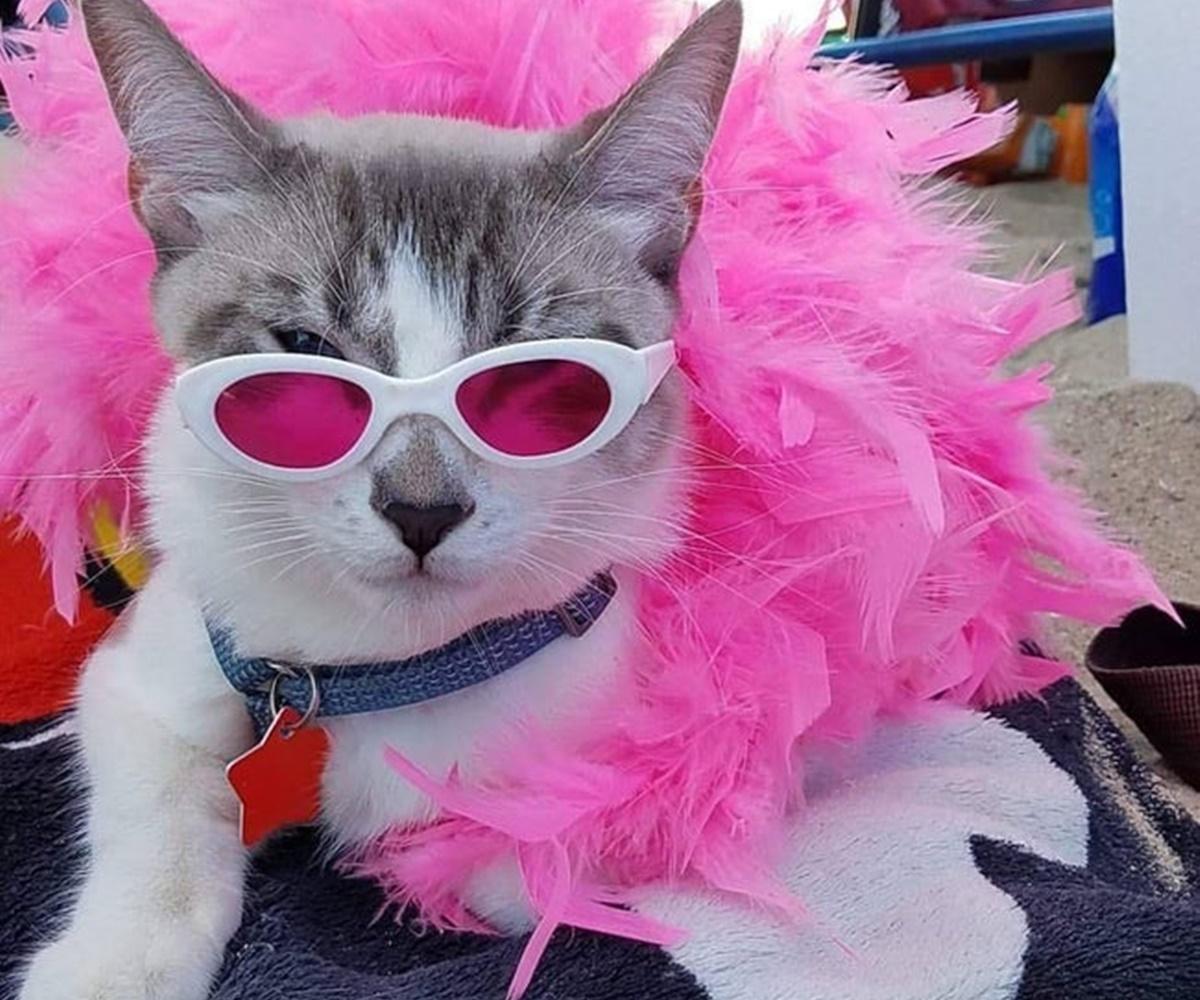 gatto flamingo