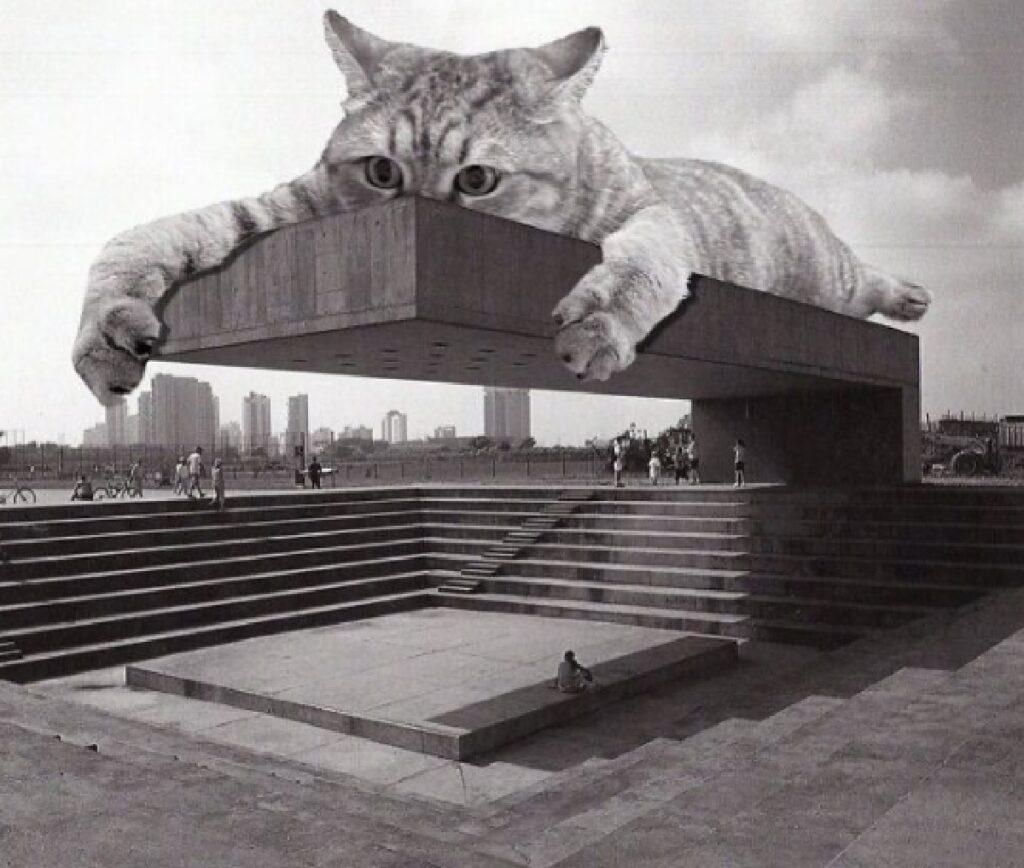 gatto edificio san paolo brasile