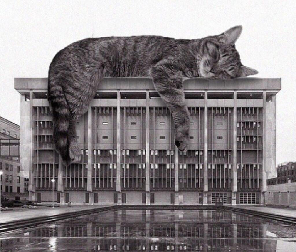 gatto sopra edificio milwaukee