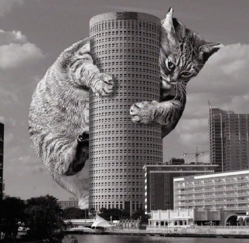 gatto tampa florida edificio