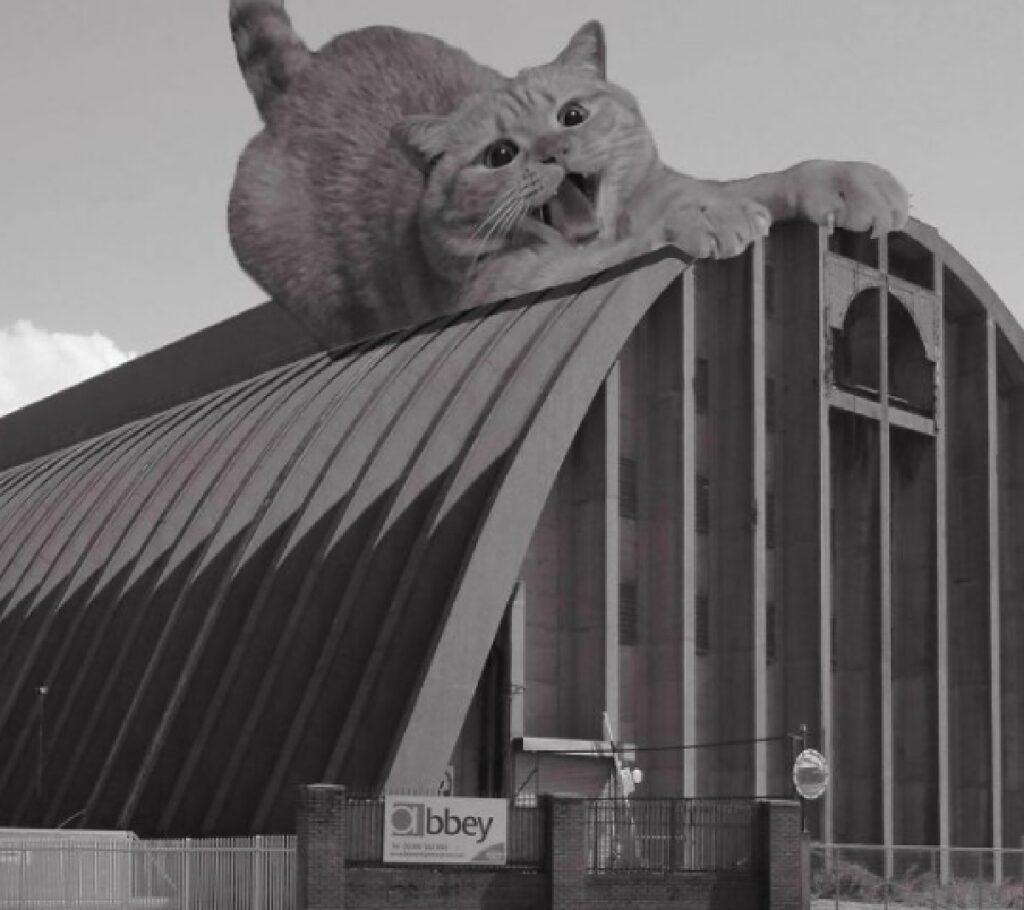 gatto liverpool zuccherificio