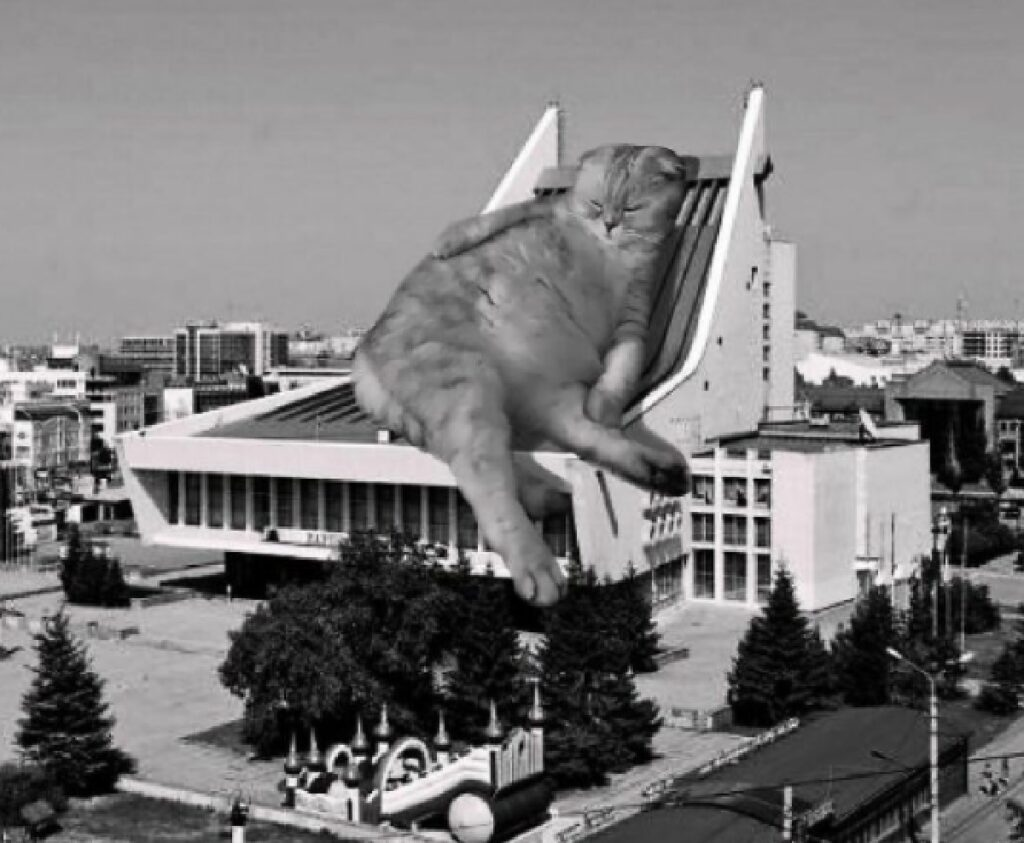 gatto dorme su edificio russia