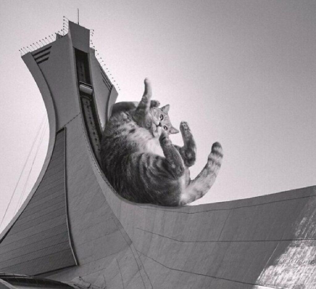 gatto scivola torre montreal