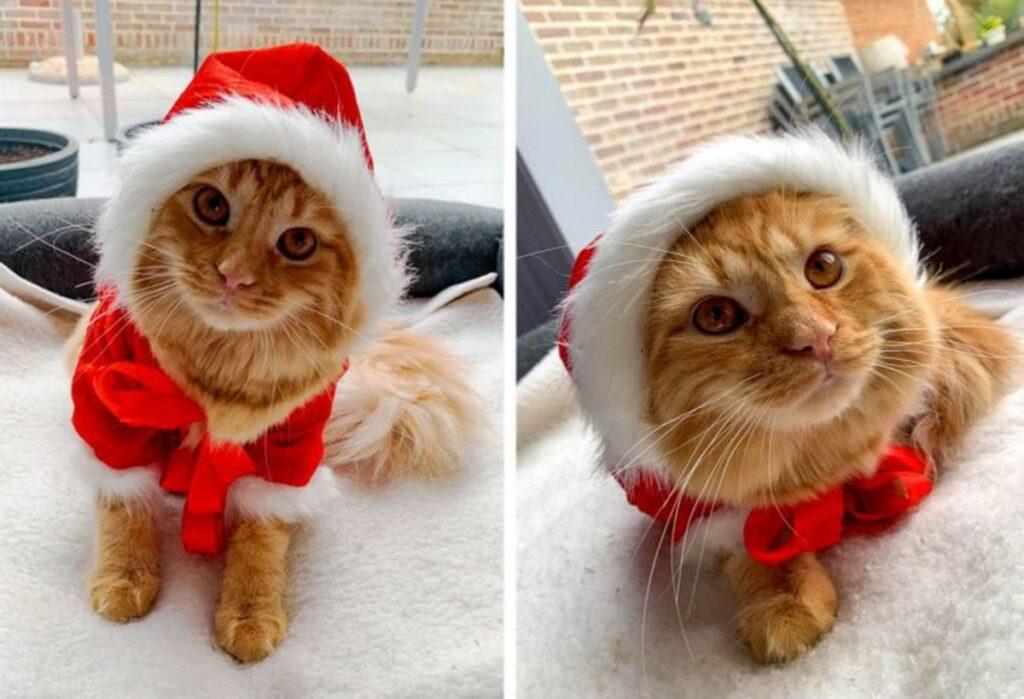 gatto natale cappello