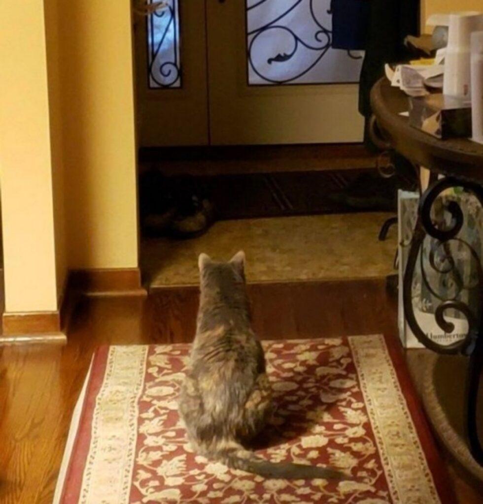 gatto guarda porta