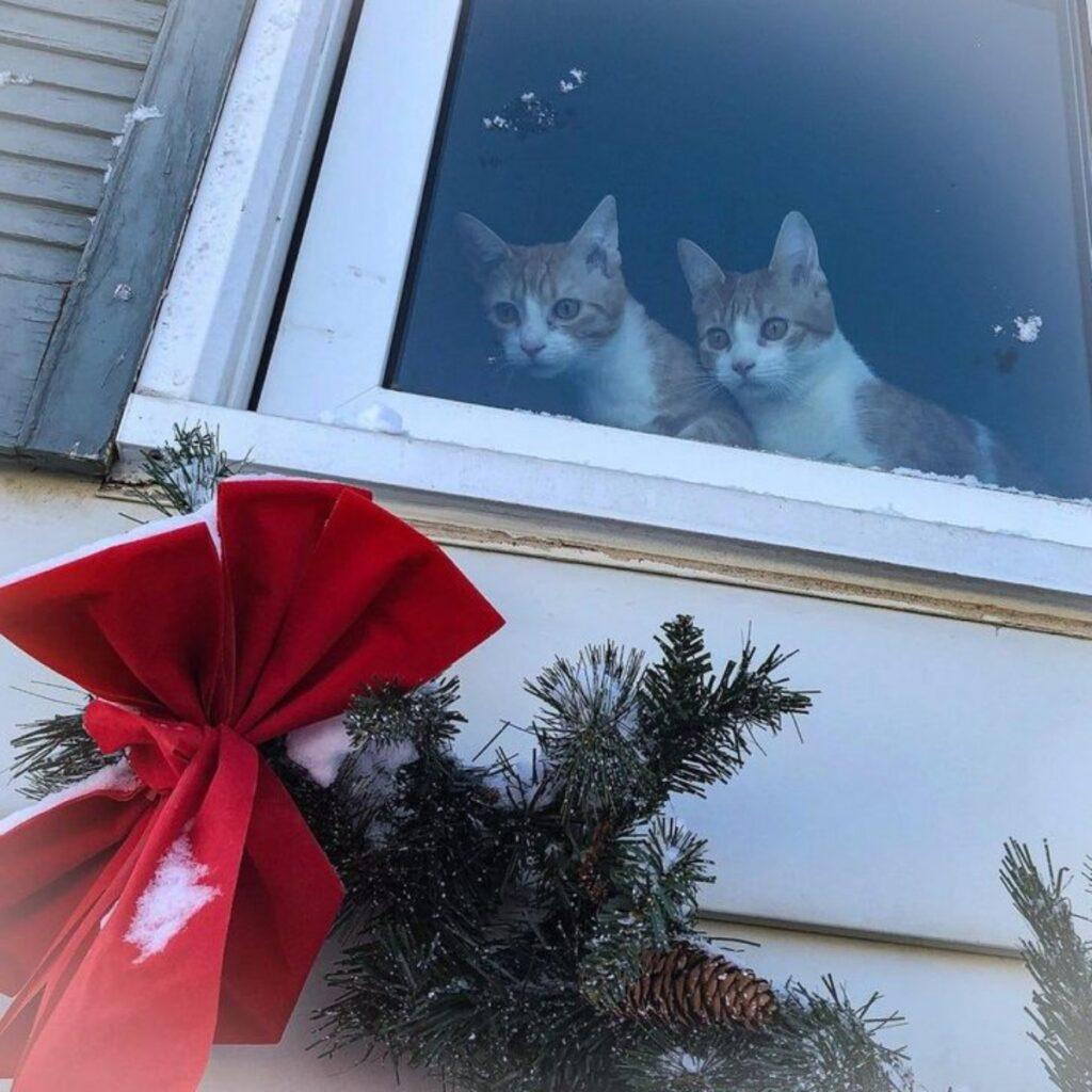mici finestra guardano