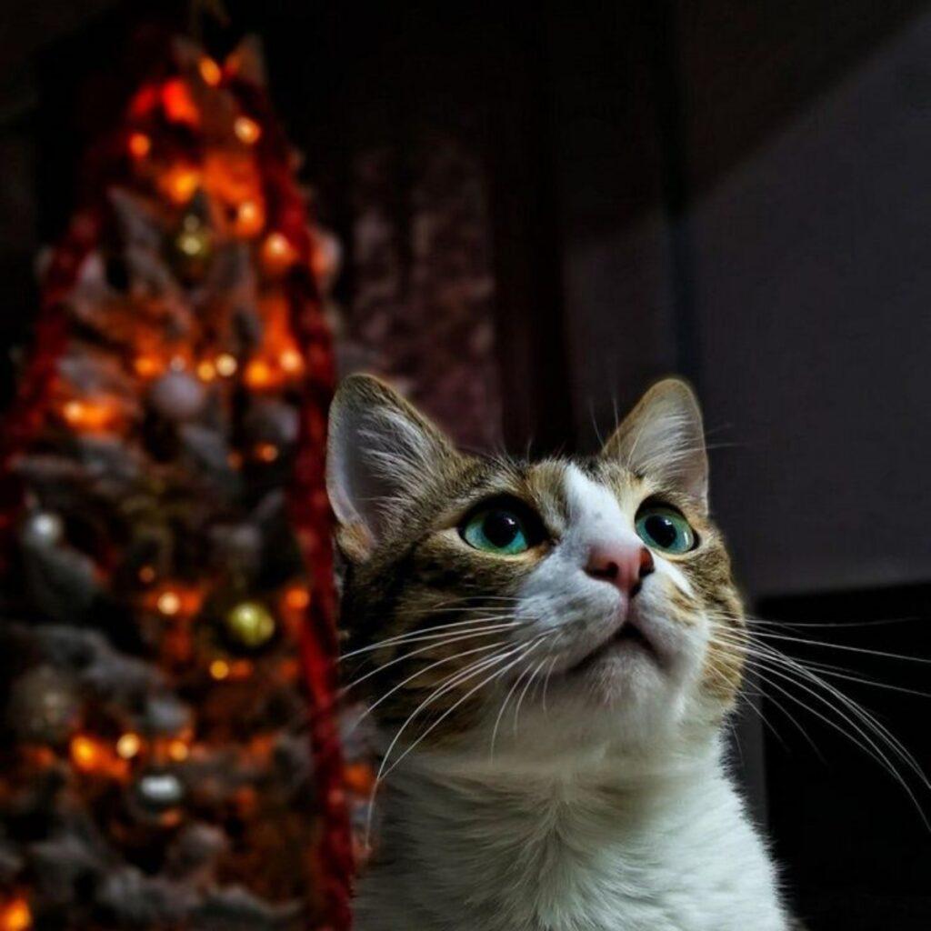 gatto albero natale