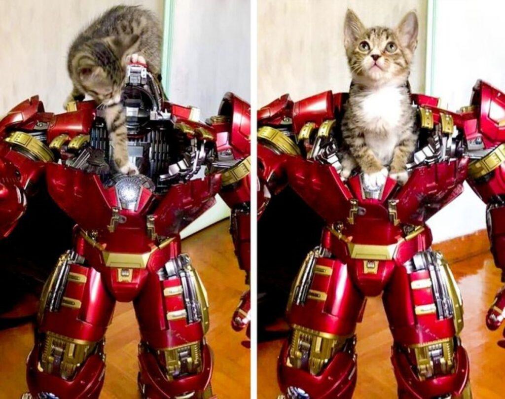 gatto iron man