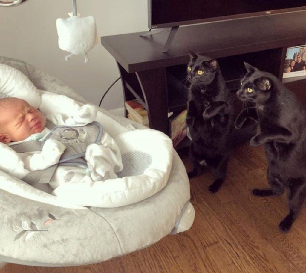 mici neri felini