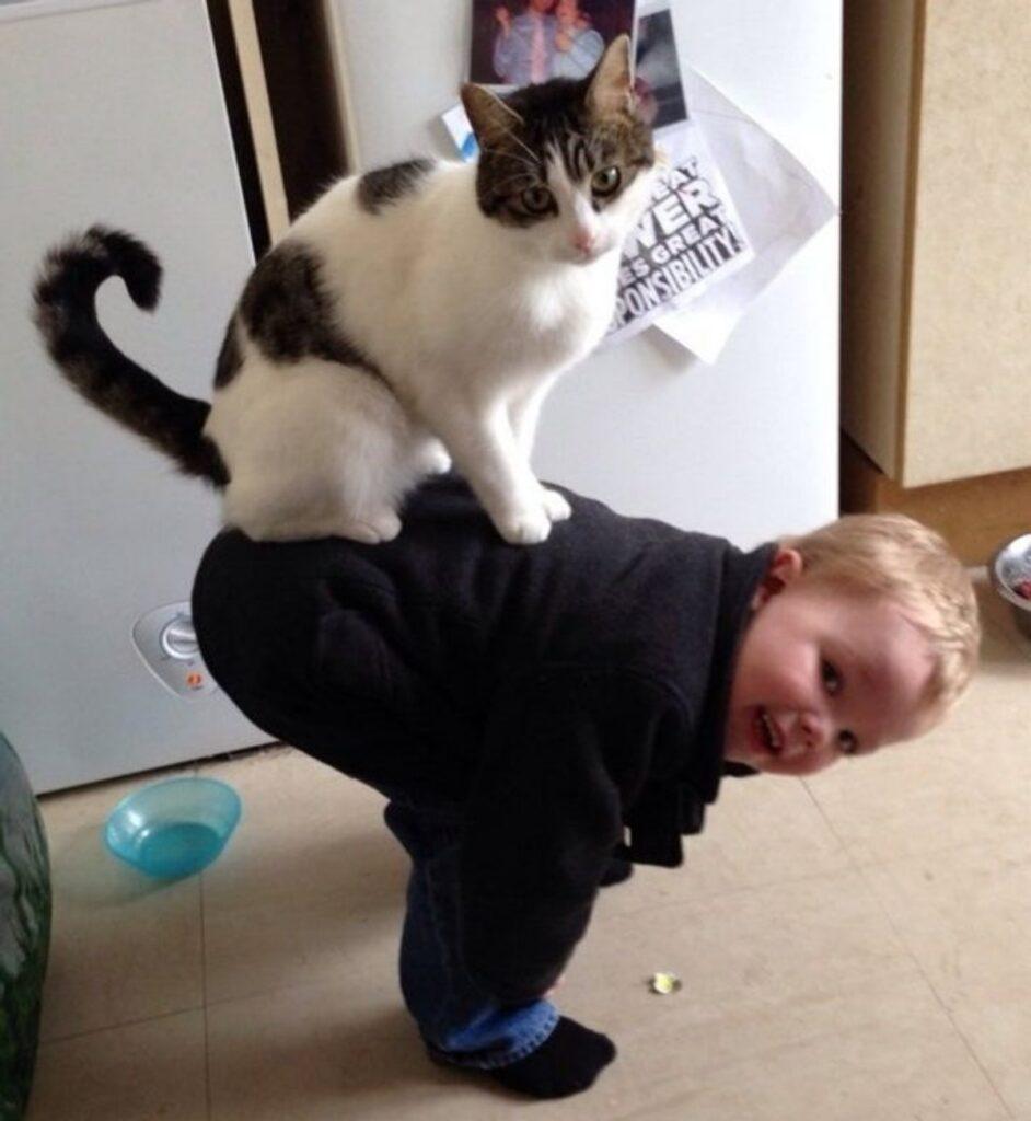 bimbo gatto schiena