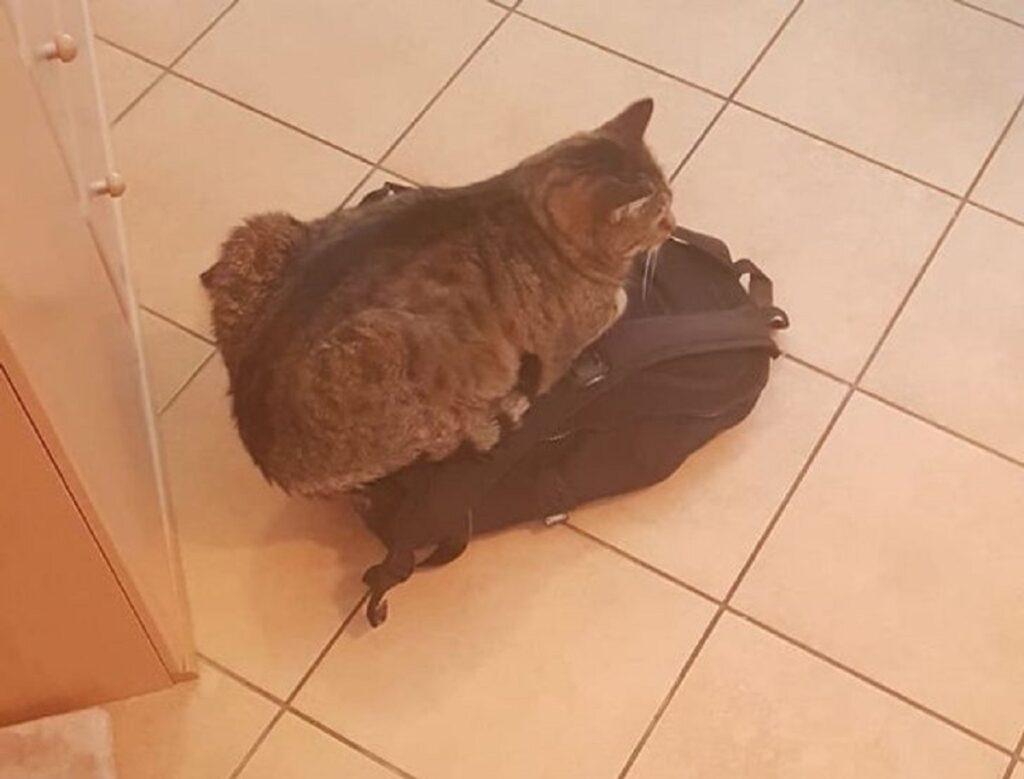 gatto zaino seduto