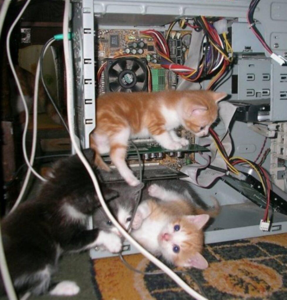 gatti computer fili