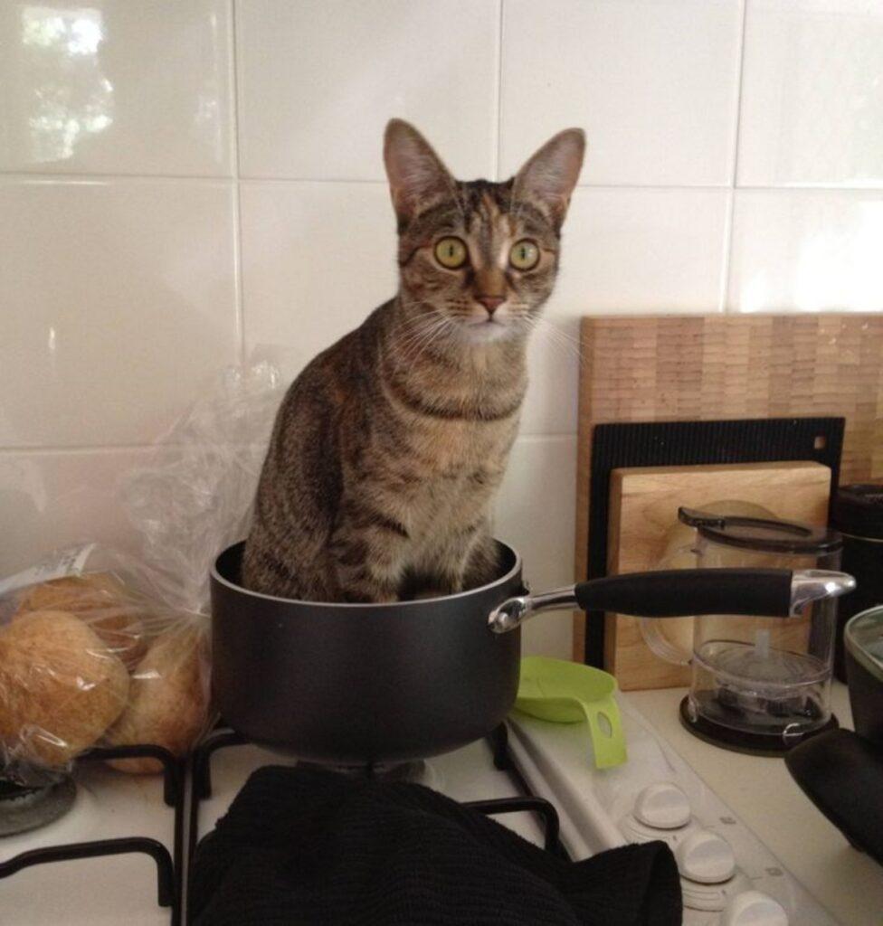 gatto pentolino dentro