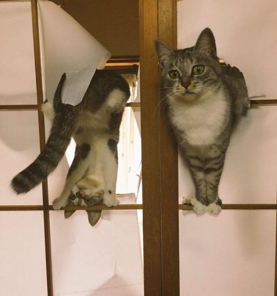 gatti tela legno