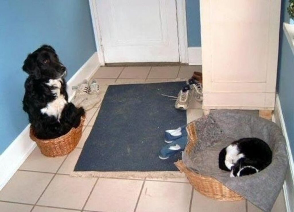 gatto cuccia rubare