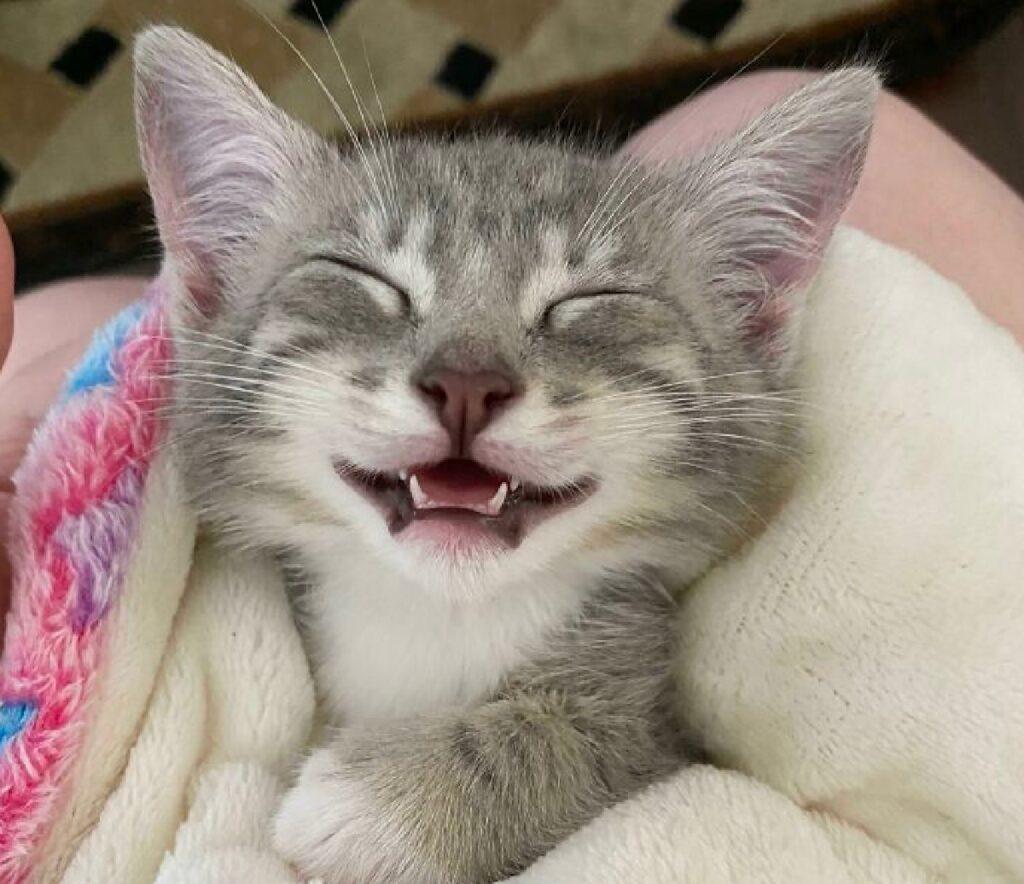 gatto sorriso dopo adozione