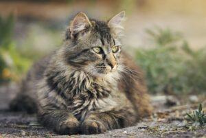 gatti che affrontano istante adozione