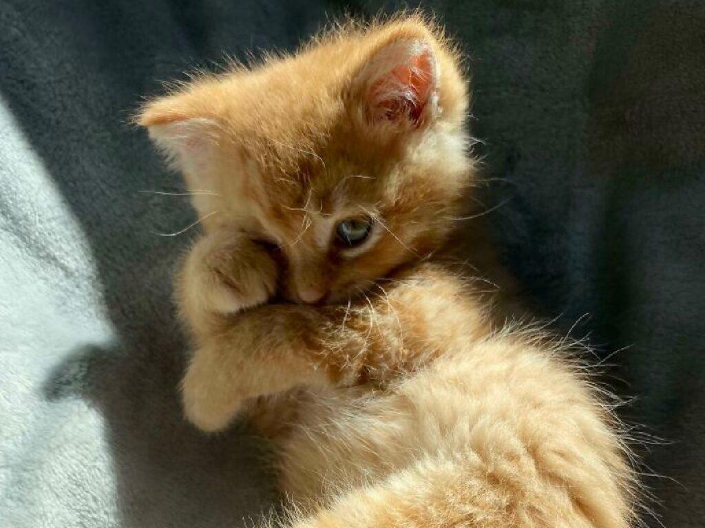 gattina fa finta di essere top model