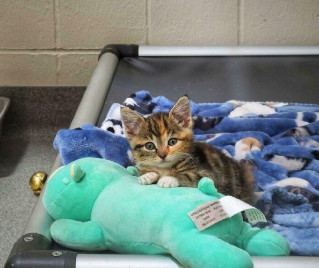 gattino piccolo rifugio lettino