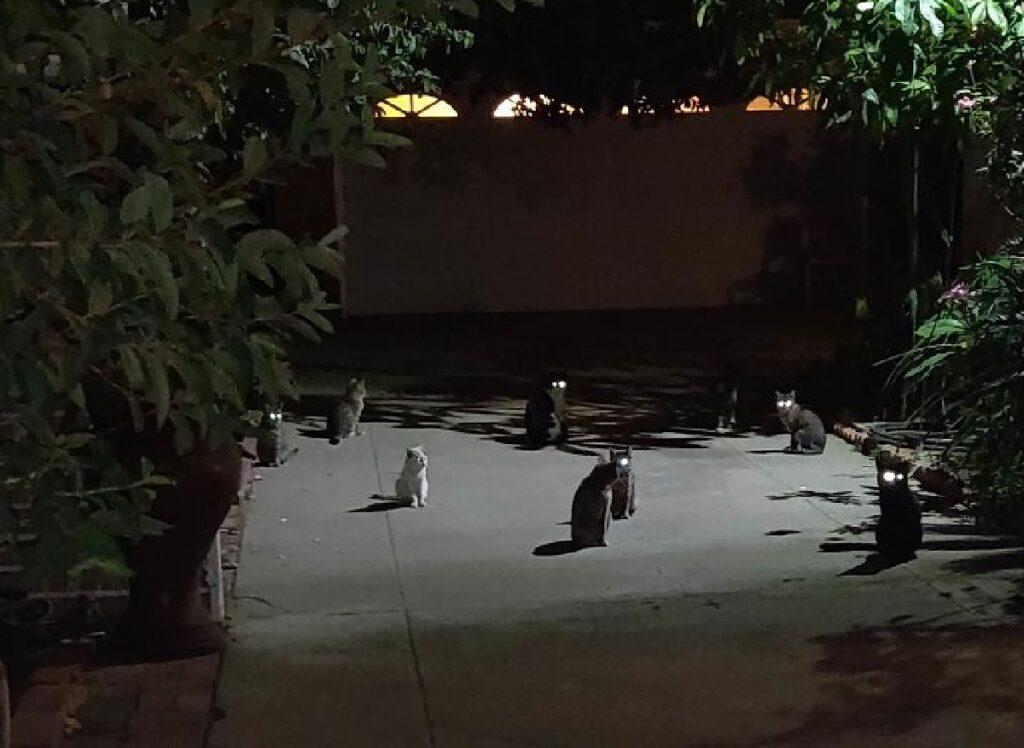 gruppo gatti notte profonda