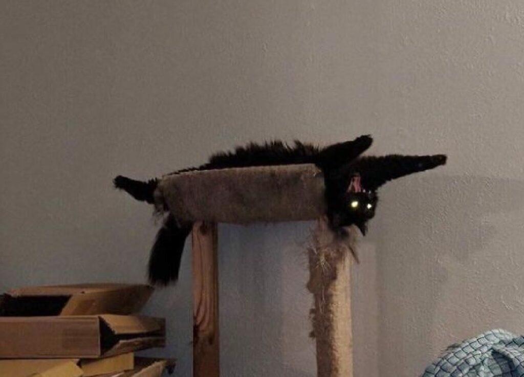 gatto nero disteso al contrario