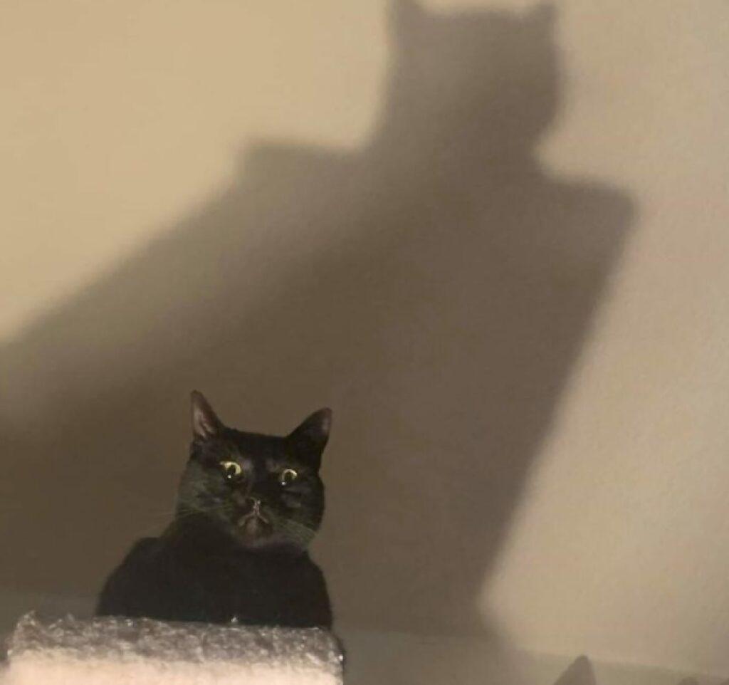 gatto nero ombra alle spalle