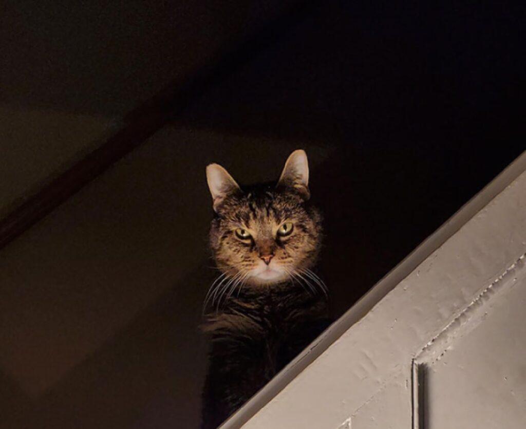 gatto esce dalla penombra